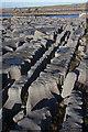 R0596 : Limestone pavement near Doolin Quay by Bob Jones