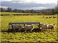 SO7334 : Sheep pasture near the Pepper Mill by Bob Embleton