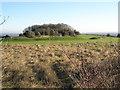 SU6806 : Golfers near Dead Mans Wood by Basher Eyre