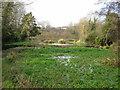 SU7139 : Flood Meadows, Alton, the old watercress beds by Steve Millar