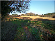 SU7824 : Field to the east of Sussex Border Path by Chris Gunns