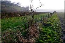 ST6902 : Alton Pancras by Nigel Mykura