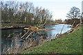 NY6324 : Flood Debris in River Eden by Bob Jenkins