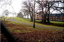SX9591 : Winter Trees  from  Digby Drive Exeter by Jan Baker