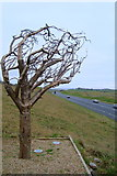G8559 : Tree sculpture on N15 by louise price