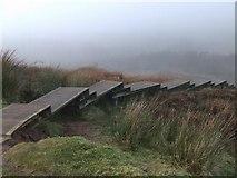 NS2471 : Cornalees boardwalk by Thomas Nugent