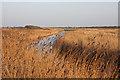 TM4974 : Dunwich River by Hugh Venables