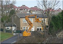 SE1321 : Lopping a tree, Tofts Grove Fold, Rastrick by Humphrey Bolton