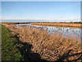 TG4014 : Footpath along the River Bure by Evelyn Simak
