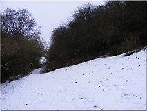 SO9194 : Snowy Clearing by Gordon Griffiths