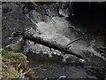 SO3996 : Ice on Darnford Brook by Derek Harper