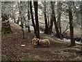 SO4096 : Sheep by Darnford Brook by Derek Harper