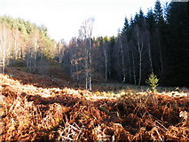 NH3716 : Track going through forest Clearing above Bhlàraidh by Sarah McGuire