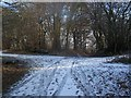 TQ6864 : Footpath junction in Pastead Wood by David Anstiss