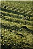 SO8843 : Ant hills and ridge and furrow by Philip Halling