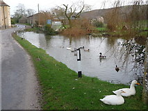 SY9282 : East Creech: the pond by Chris Downer