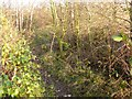 SK5134 : Attenborough Nature Reserve Path by Andy Jamieson