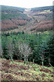 NY2888 : Eskdale forestry by Walter Baxter