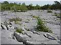 SD4877 : Gaitbarrow Nature Reserve by Paula Healey