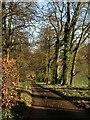 SX8257 : Drive to Avenue Cottage Gardens by Derek Harper