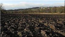 NZ1465 : Field between the River Tyne and the waggon-way cycle track by Andrew Curtis