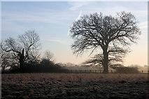 TL8063 : Little Saxham meadow by Bob Jones