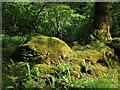 NM8464 : Mossy boulder, Ariundle by Richard Webb