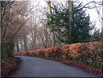 TQ4540 : Lane near Cowden by Oast House Archive