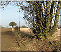 TG2229 : View north along a field boundary by Evelyn Simak