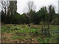 TL4556 : Allotment plot in winter by Sandy B