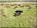 SJ7049 : The dogs in Wybunbury by Paul Bridge