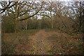 TQ2352 : Woodland south of Mogador by Ian Capper