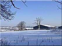 TQ2996 : Farmland, South Lodge Farm, Enfield by Christine Matthews