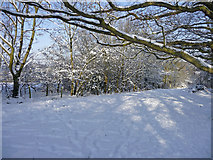 TQ2996 : Clearing, Trent Park, Enfield by Christine Matthews