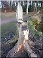 NY5459 : Tree seat, Talkin Tarn, Brampton by Humphrey Bolton