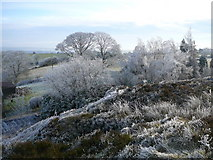 SJ9054 : A winter's day on Marshes Hill near Brown Edge. by Colin Park