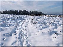 NZ5812 : Footpath, Newton Moor by Stephen McCulloch