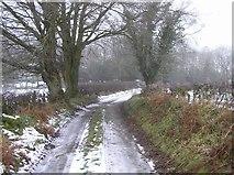 H4376 : Wintry lane, Mountjoy by Kenneth  Allen