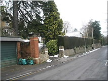 SU9948 : Hedge in Guildown Road by Basher Eyre