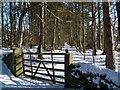 NY8056 : Glade in plantation below Keenley Wesleyan Chapel by Roger Morris