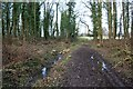 SO8043 : Track through Lower Arles Wood by Bob Embleton