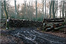 SU6779 : Timber operations in Nuney Copse by Graham Horn