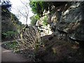 NZ0878 : Quarry Garden at Belsay Hall by Oliver Dixon