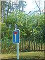SN1516 : Lane to St David's Church, Llanddewi Velfrey by Deborah Tilley