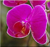 TQ1877 : Orchid, Kew Gardens, Surrey by Christine Matthews