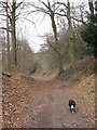 SP8809 : Holloway in Wendover Woods by Chris Reynolds