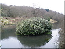 ST2213 : Otterford Lakes Nature Reserve by Roger Cornfoot