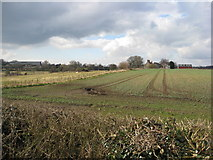SK4976 : Clowne - View across fields towards Manor Farm by Alan Heardman