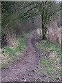 SP9205 : Ashotts Lane becomes narrower by Rob Farrow