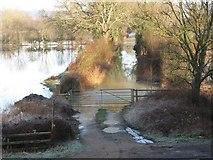 SY9898 : Flooding at Bear Mead by John Palmer